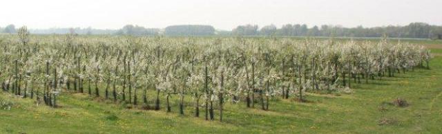 cropped-pommes-du-val-de-loire-verger-collection-des-pommes-du-val-de-baule.jpg