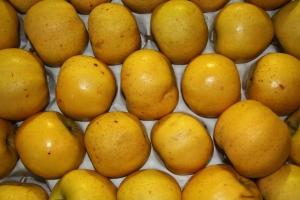 pommes Belchard du Val de Loire à Beaugency par le verger collection du val de Baule