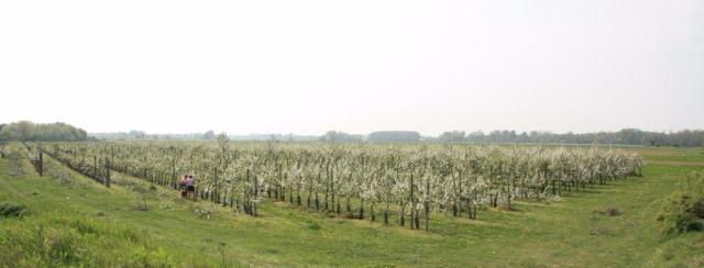 le verger collection des pommes du Val de Baule en Val de Loire