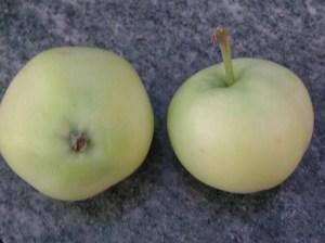 Pommes transparente blanche du Val de Loire, par le verger collectiondu Val de Baule