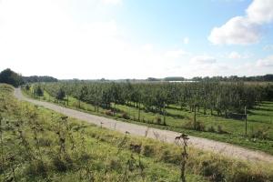 verger collection du Val de Baule en Val de Loire, dans le Loiret