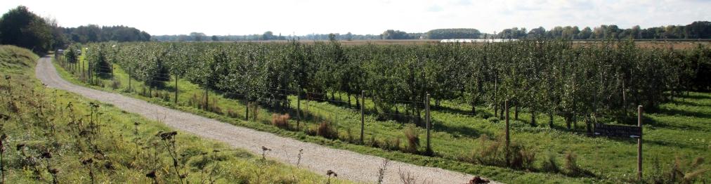 Verger collection du Val de Baule en région centre Val de Loire, près de Beaugency et Meung sur Loire, sur la route de la Loire à vélo