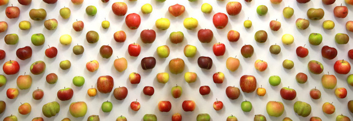 variétés diverses de pommes du verger du Val de Baule en Val de Loire, près de Beaugency et Meung sur Loire dans le Loiret