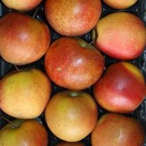 Les jardins d'Olivier & La Réserve du Val - Pommes Cat 1 Rubinette