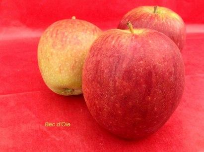 pomme variété bec d'oie des verger du Val de Loire, dans le Loiret près de Beaugency et Meung sur Loire en Région Centre.