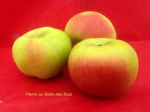 pommes anciennes du val de Loire, la pome Belle des buis ou Pomme Pierre, par le verger collection du Val de Baule, dans le Loiret près de Beaugency et Meung sur Loire