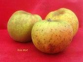 pomme-val-de-Loire-bois-mort pomme du verger collection du Val de Baule