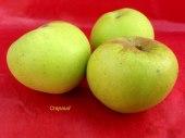 pomme-val-de-Loire-Crapaud pomme du verger collection du Val de Baule