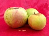 pomme-val-de-Loire-gros-locard pomme du verger collection du Val de Baule