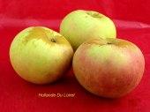 pomme-val-de-Loire-Hollande-du-Loiret pomme du verger collection du Val de Baule