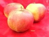 pomme-val-de-Loire-idared pomme du verger collection du Val de Baule