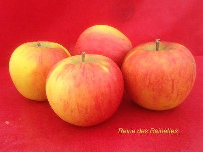pomme-val-de-Loire-Reine-des-Reinettes