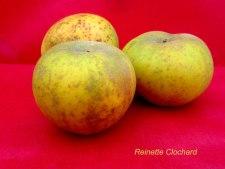 Pomme Reinette Clochard