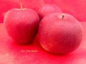 pomme-val-de-Loire-roi-tres-noble pomme du verger collection du Val de Baule