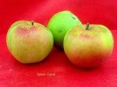 pomme-val-de-Loire-sebin-carre pomme du verger collection du Val de Baule