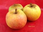 pomme-val-de-Loire-Sebin-gros pomme du verger collection du Val de Baule