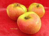 pomme-val-de-Loire-teint-frais pomme du verger collection du Val de Baule