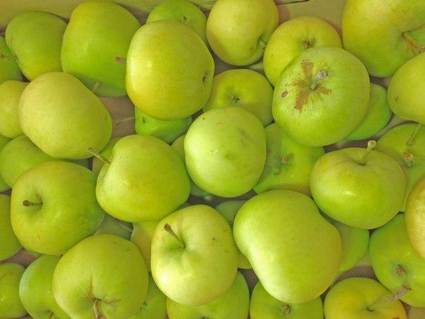 pommes du val de Baule à Beaugency en région Centre Val de loire