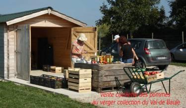 pommes du val de Baule en région centre val de Loire vente cueillette au verger , sur la route de la Loire à vélo