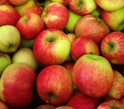 Pomme Elstar, variété du verger collection du Val de Baule dans le Loiret en Val de Loire
