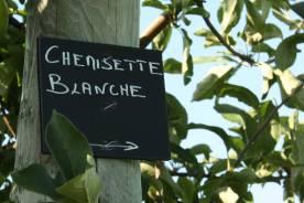 pomme-val-de-loire-au-verger-collection-chemisette-blanche