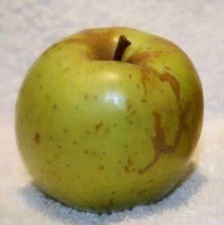 Pomme-sainte-germaine-val-de-loire