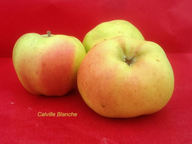 pomme-val-de-loire-calville-blanche