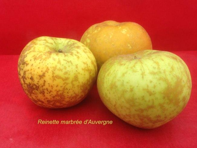 pomme-val-de-loire-reinette-marbree-auvergne