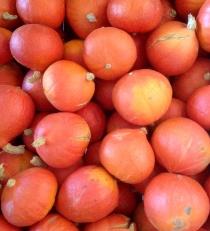 pommes val de Baule potimarrons